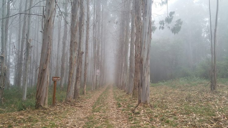 When we walked from A to B, we walked through a misty forest.