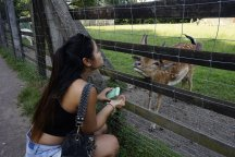 Trying to feed a deer at the Wildpark.